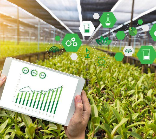 gestion agricole culture sous serre